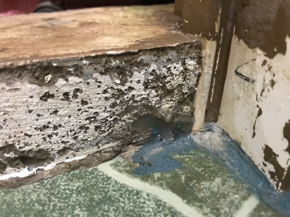 GET RID OF ANTS QUICKLY NATURALLY