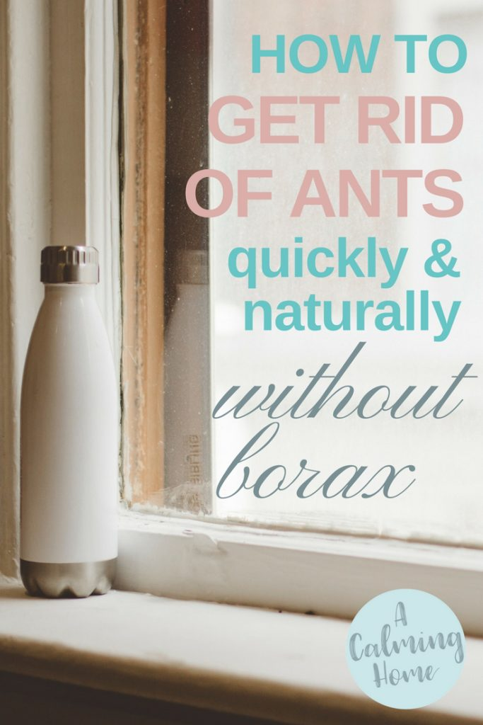 get rid of ants quickly naturally without borax