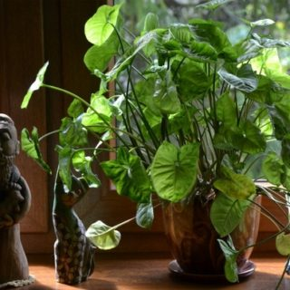 20 of the Best Hard to Kill Indoor Plants