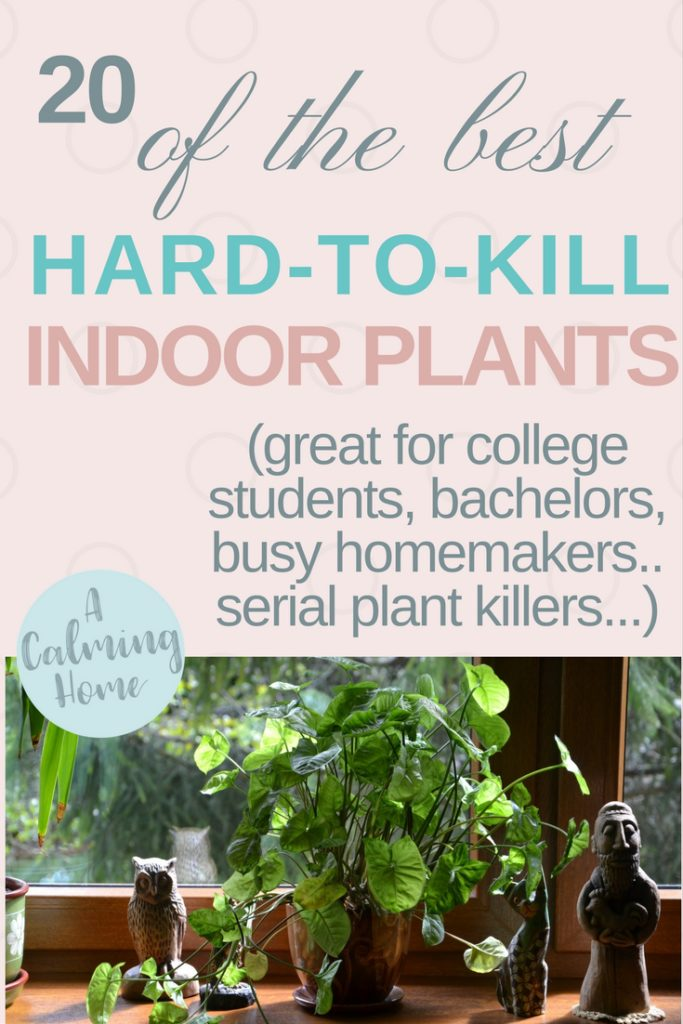 best easy to care for and hard to kill plants for students, bachelors, homemakers