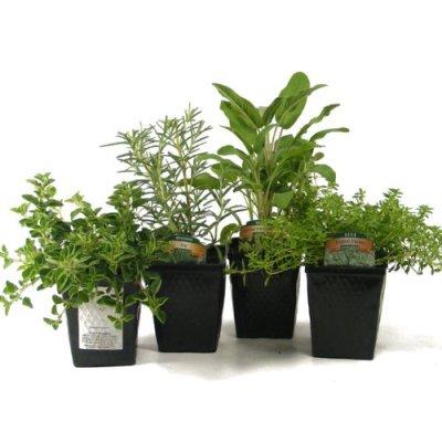 herbs hard to kill plants