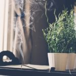 Is incense bad for you?